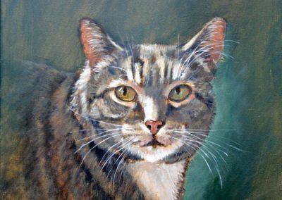 Portret van een gestreepde kat
