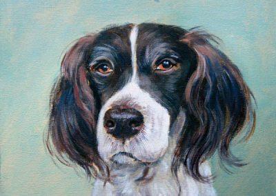 Portret van een hond met flapoortjes