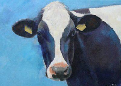 Portret van een koe