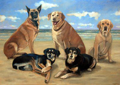 Portret van vijf honden op een strand
